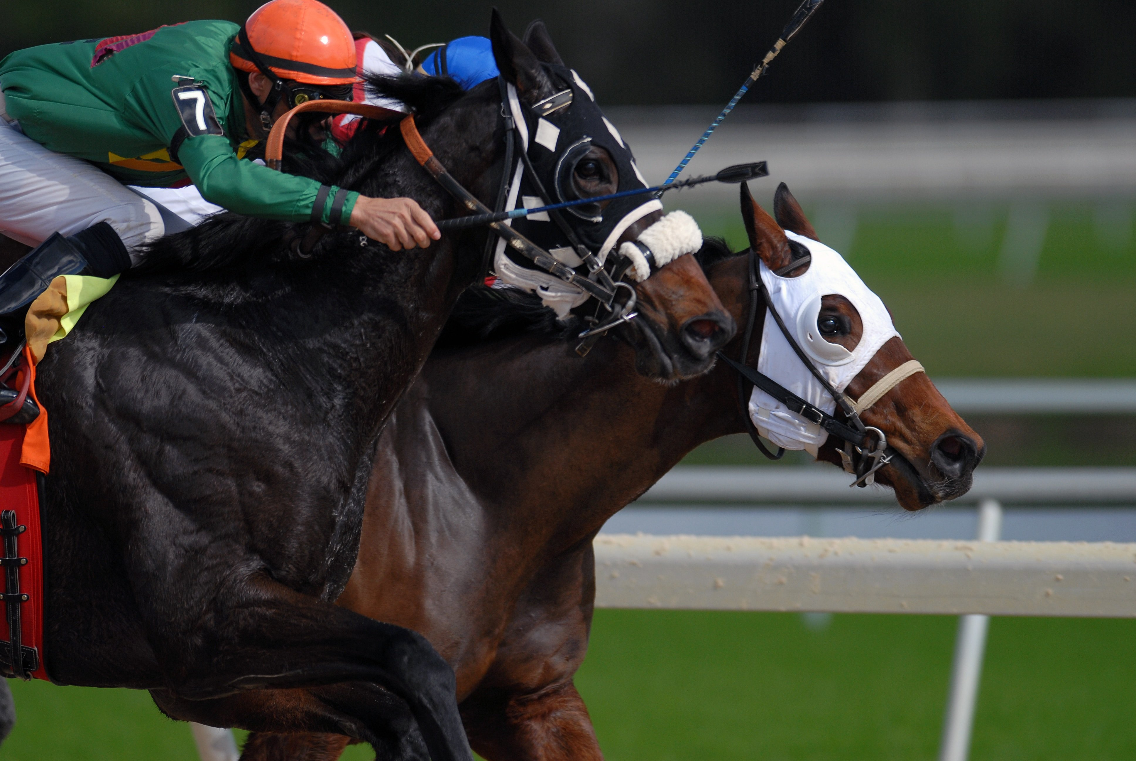 Thoroughbred Horse Racing