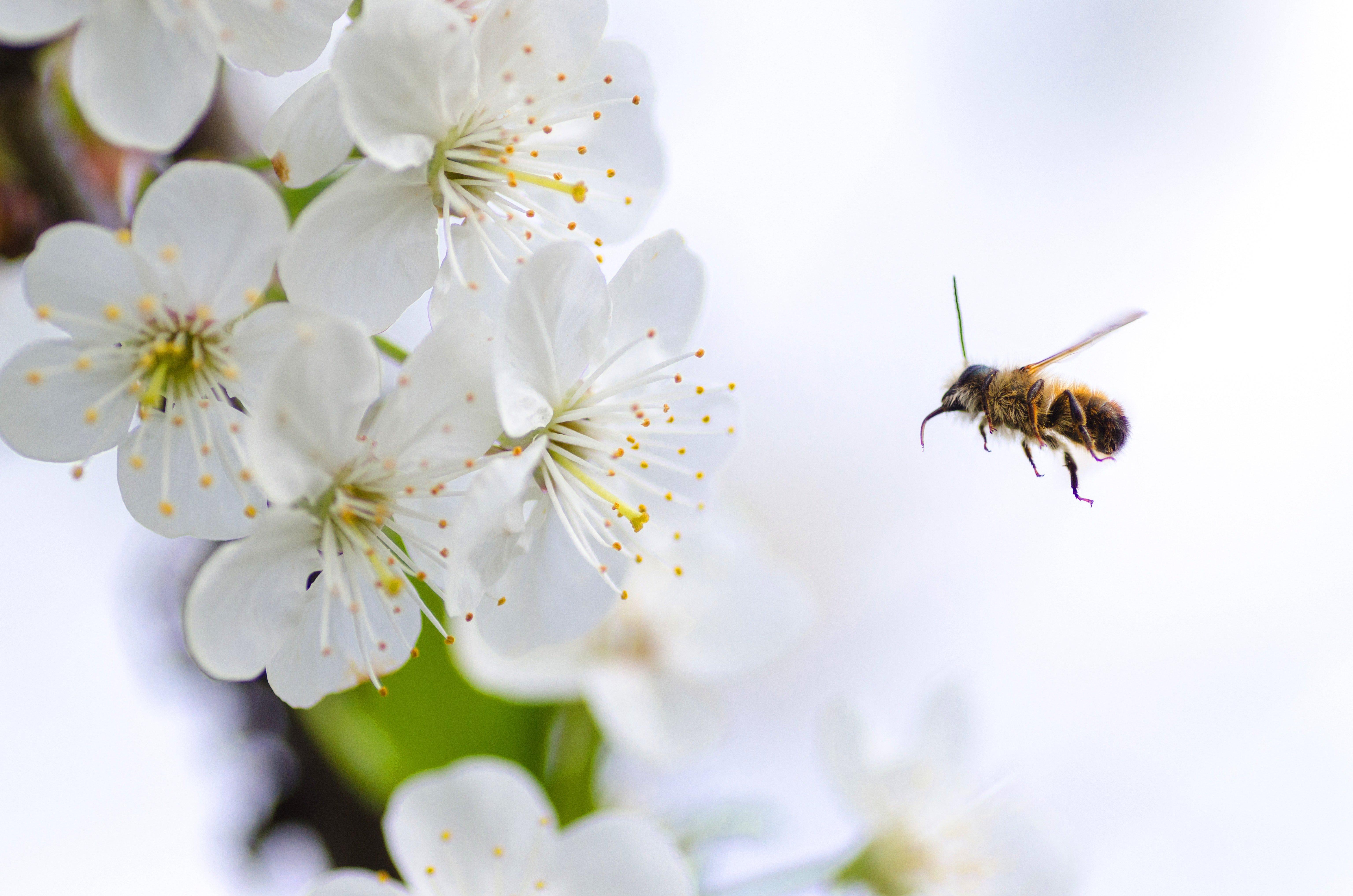 Honeybee Festival